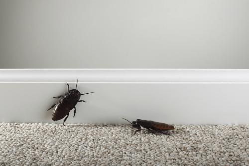 два таракана в квартире