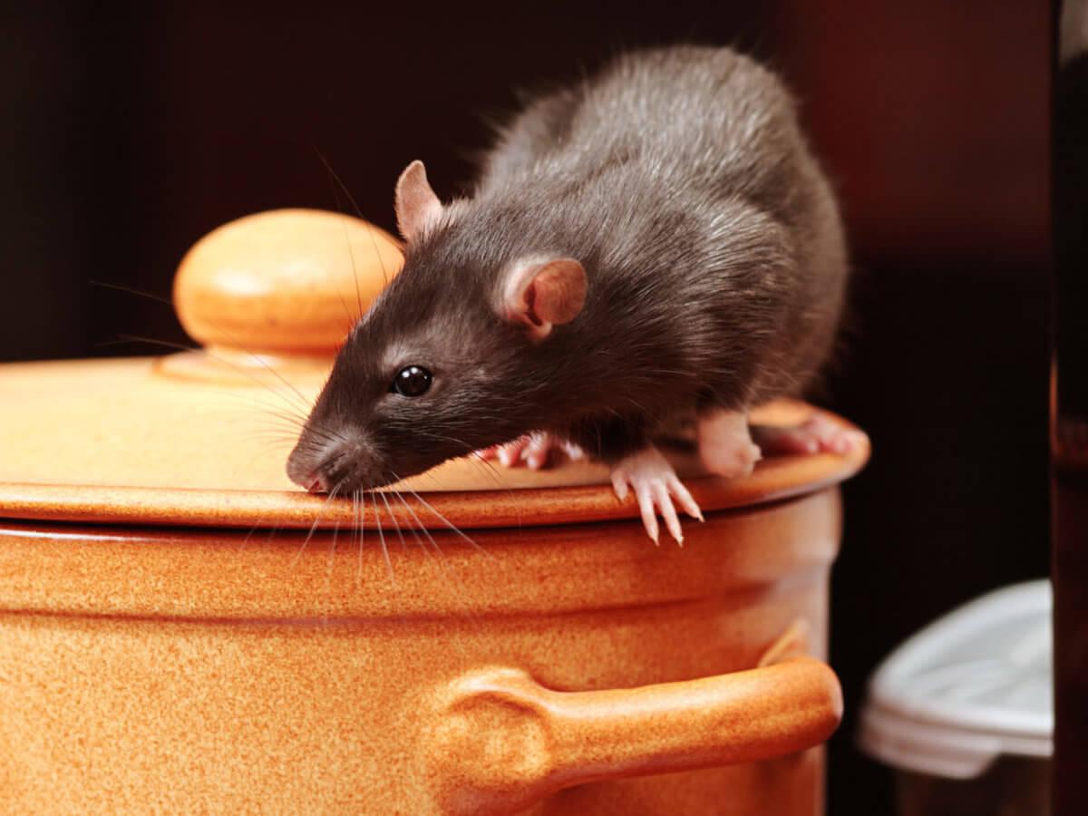 Отпугиватель мыш и крыс навсегда