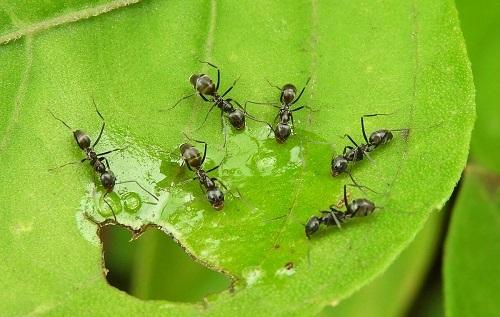 средства от муравьев в огороде